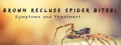 How To Treat A Brown Recluse Spider Bite There are several different types