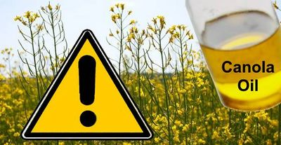 Is Canola Oil Dangerous For Your Health? foods that