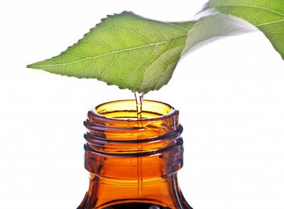 Tea Tree Oil and Tulsi - What You Need To Know found in